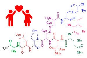 Oxitocina. La hormona del amor